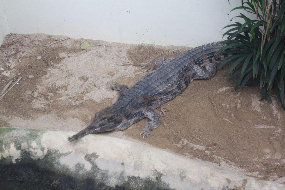 草津熱帯圏 爬虫類コーナー2