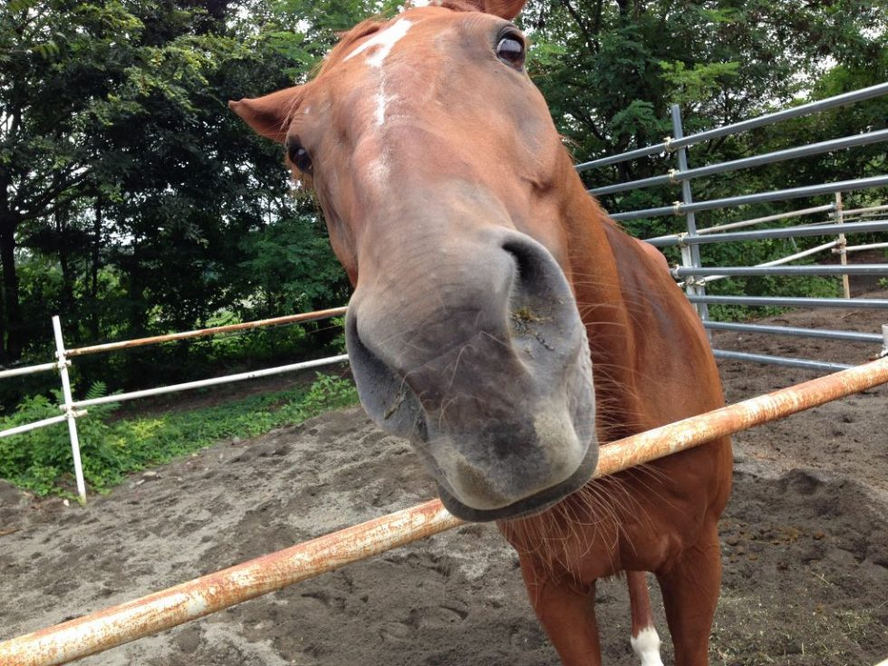 赤城乗馬クラブのお馬さんたち