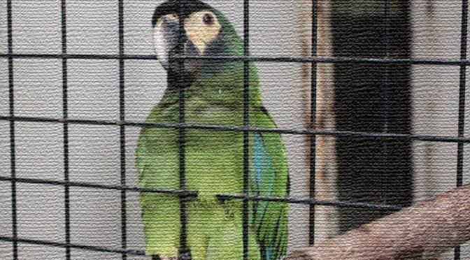 Photo Gallery 鳥