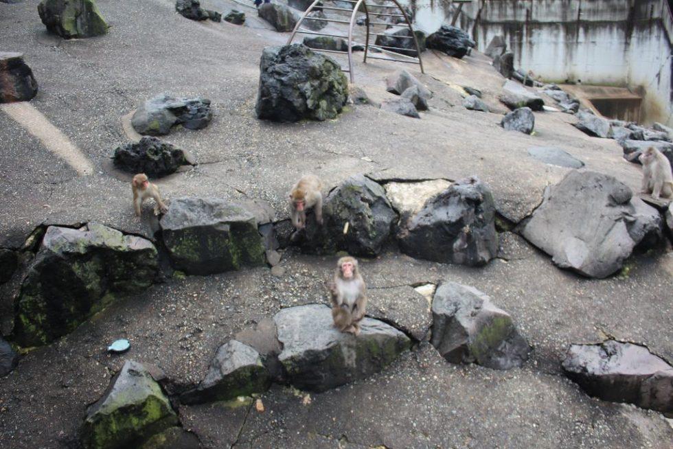 草津熱帯圏サル山2