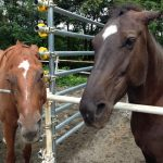 牝馬同士の争い2