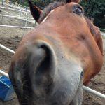 赤城乗馬クラブ 厩舎と放牧場