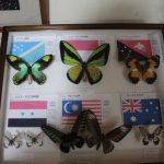 世界の国蝶