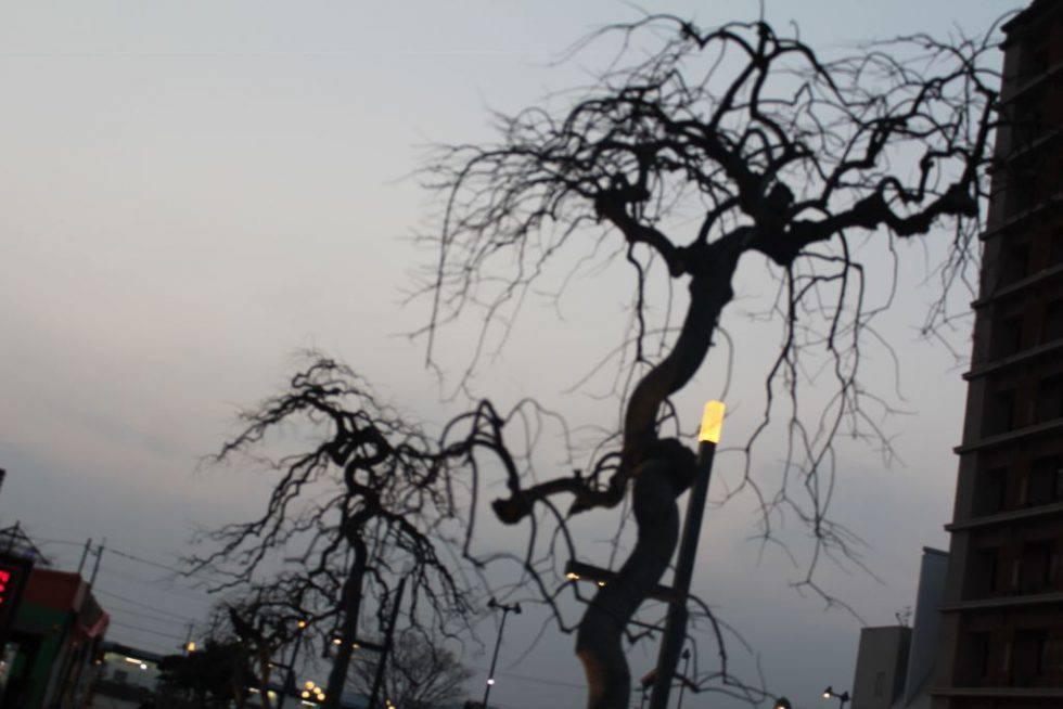 水木しげるロードにいると木々まで妖怪に見えてくる