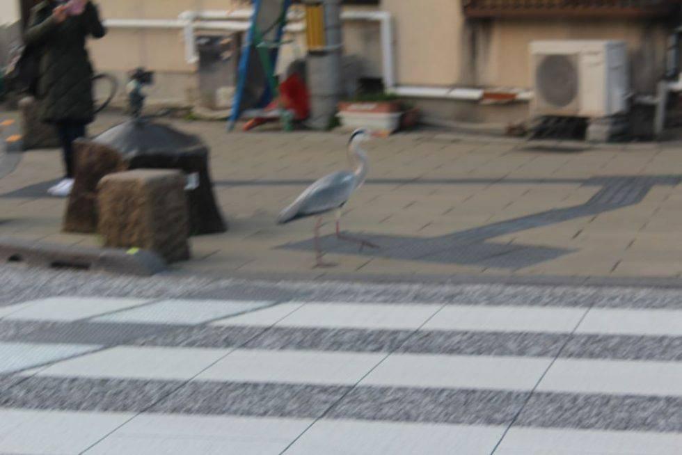 水木しげるロードに現れた鳥2