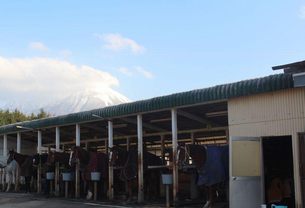 冬毛になった馬たちとの再会 大山乗馬センター