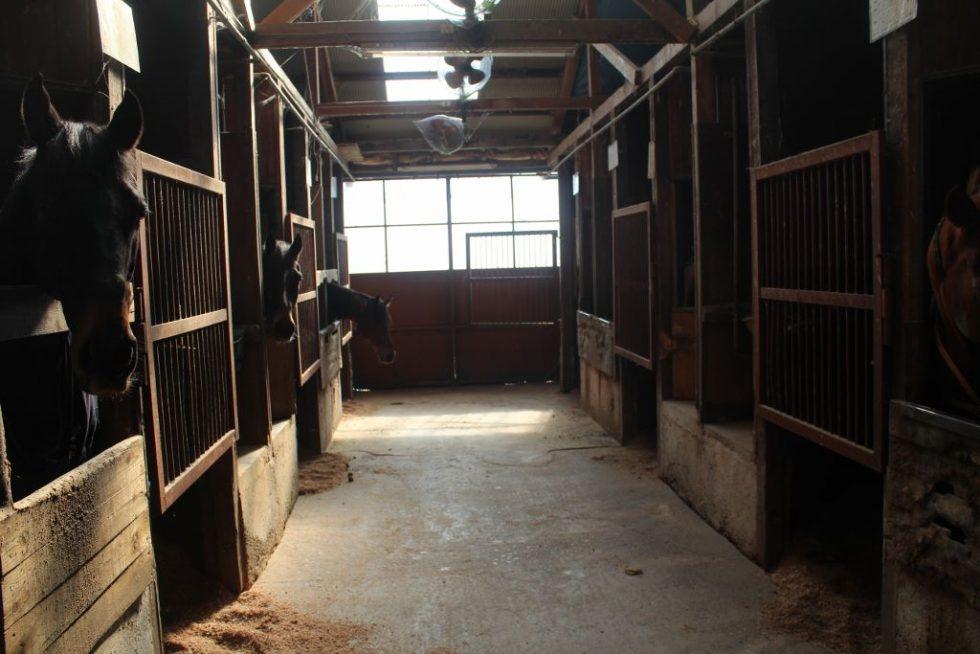 大山乗馬センター 厩舎 馬たちがガン見