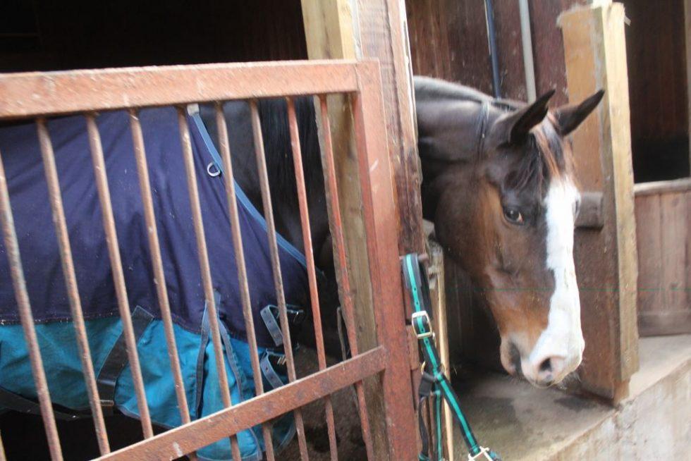 大山乗馬センター厩舎ガイド お馬さんたち2