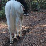 パウダースノーと行く森の小道3