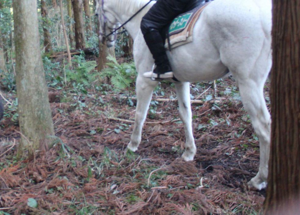 パウダースノーと行く森の小道2
