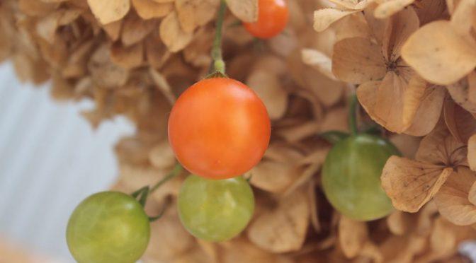 ミニトマト(プチトマト)マイクロトマト