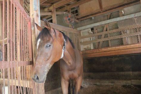 厩舎ガイド お馬さんたち2
