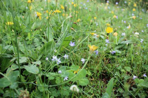 弓ヶ浜公園に咲く野草たち