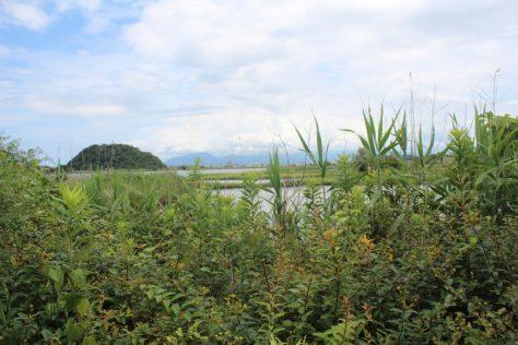 米子水鳥公園を歩く