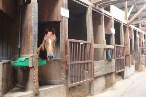 厩舎ガイド お馬さんたち
