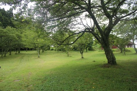 赤松池 池畔の桜並木