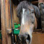 厩舎ガイド お馬さんたち3