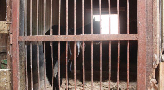 大山乗馬センター 厩舎ガイドツアー&ふれあいでむにゃむにゃ