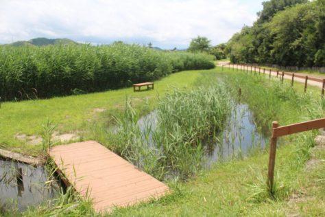 米子水鳥公園 メダカ池