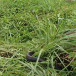 赤松池で出逢った蛇