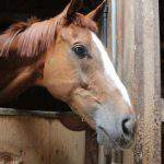 厩舎ガイド お馬さんたち1