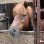 ポニー 厩舎ガイド お馬さんたち