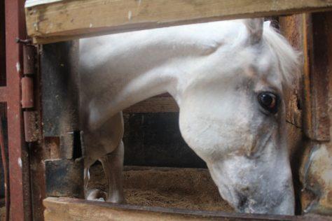 楓ちゃん 厩舎ガイド お馬さんたち