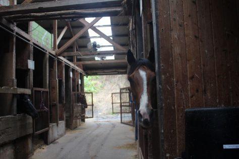 スカイフォレスト 厩舎ガイド お馬さんたち