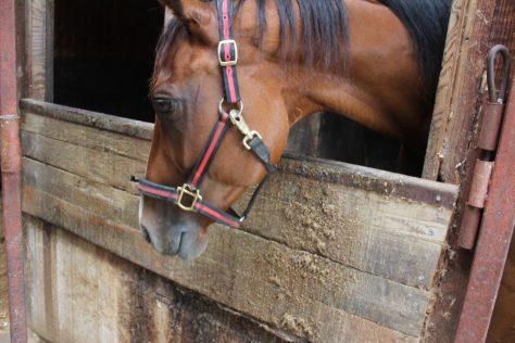 厩舎ガイド お馬さんたち4