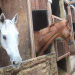 厩舎ガイド お馬さんたち8