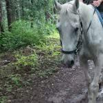 アングロアラブのパウダースノーと行く森の小道
