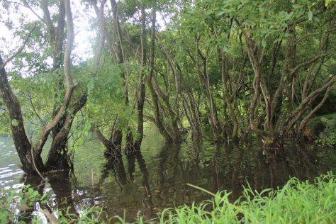 赤松池の木々