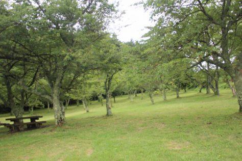 赤松池 池畔の桜並木2