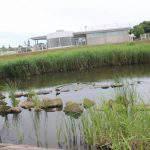 弓ヶ浜公園 水鳥