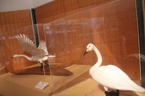 米子水鳥公園 館内展示室